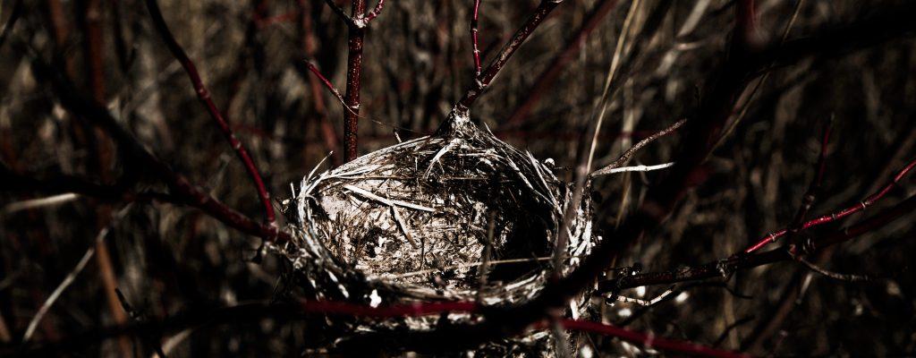 Poetry – Nest